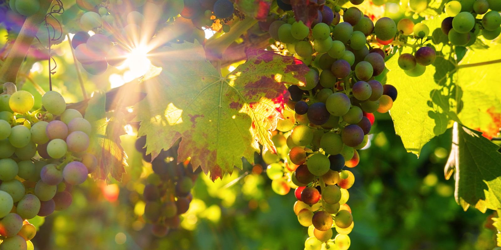 pixabay: grapes ©Bru-nO
